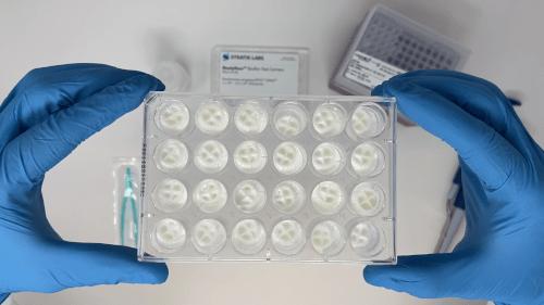ReadyNow™ Biofilm Test Carriers Tray